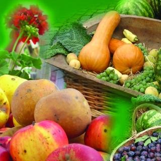 Biopiac - rendezvénysorozat Nyíregyházán